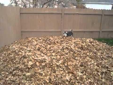 Suņukam rudens prieki!