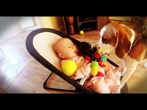 VIDEO – Vainīgs kucēns apber mazuli ar rotaļlietām. (Guilty dog apologizes baby for stealing her toy:It is never too late for apologize for friends)