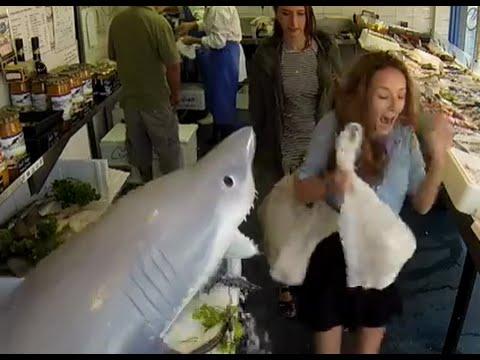 VIDEO – Haizivs uzbrukums zivju veikalā. (Shark Attack At Fish store Prank Video)