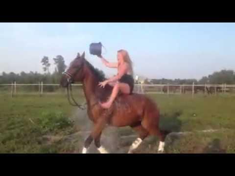 "VIDEO – Kad ""ledus spaiņa"" izaicinājums noiet greizi… (ALS Ice Bucket Challenge On A Horse Goes Wrong…)"