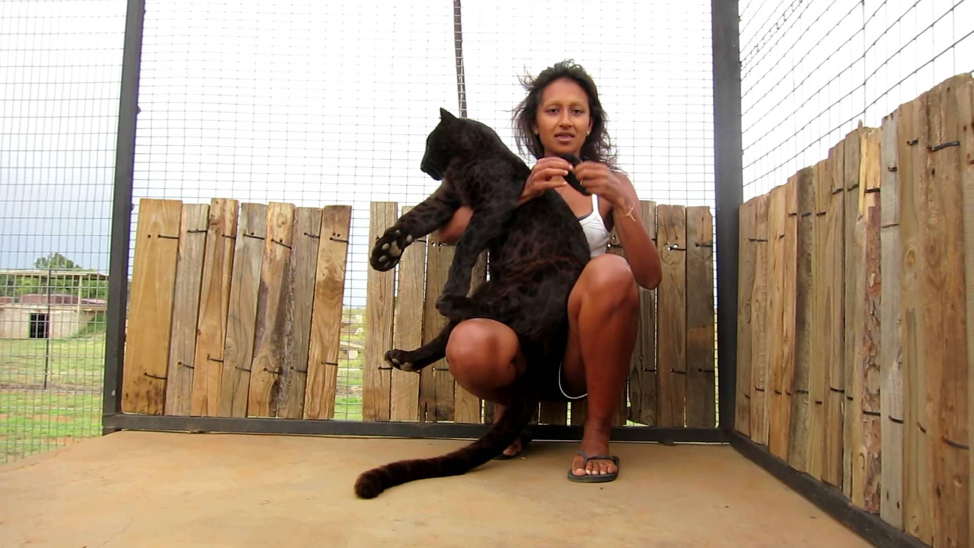 VIDEO – Leopards uzlec virsū sievietei! (Playing with Pardus the black leopard at Cheetah Experience)