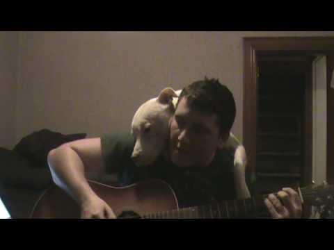 VIDEO – Šim sunim patīk saimnieka izpildītā mūzika! (Funny Dog Pitbull)