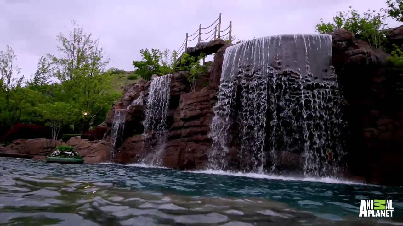VIDEO – Tā izskatās 2 miljonus ASV dolāru vērts baseins! (The Ultimate Backyard Escape | The Pool Master)