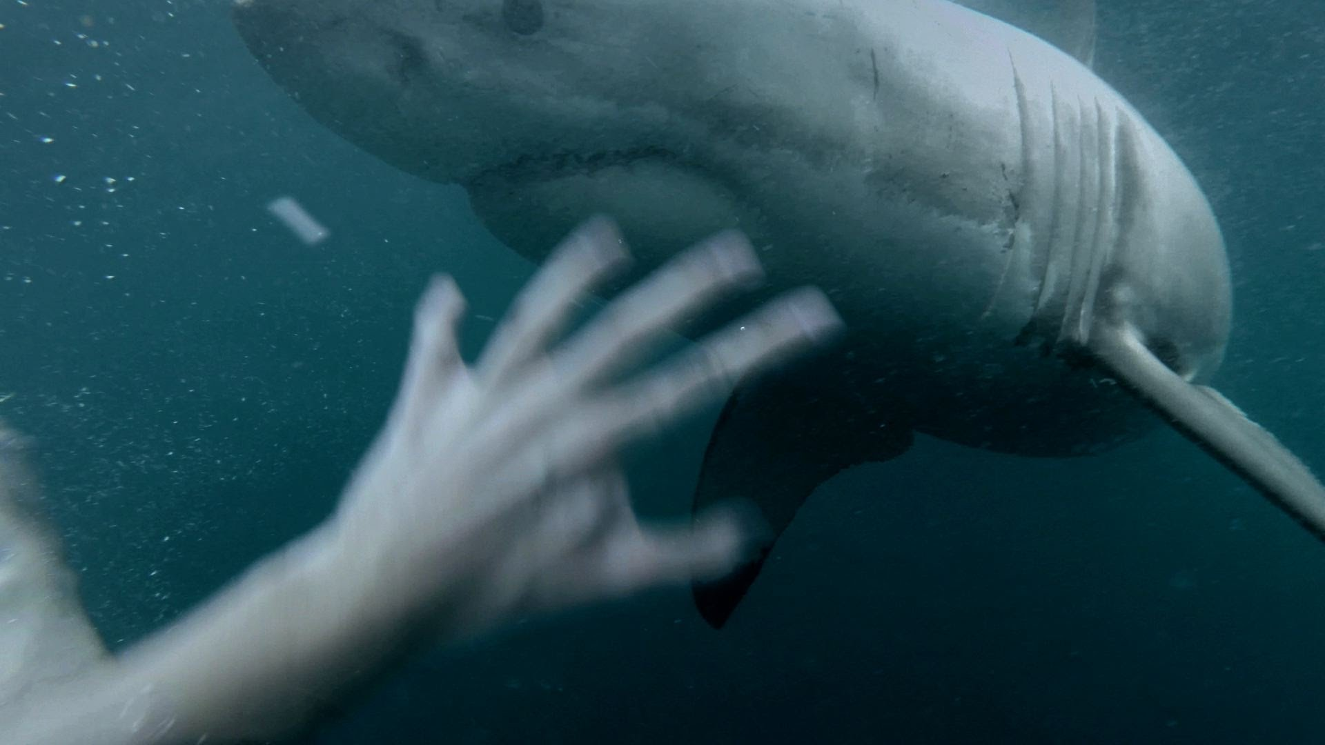 VIDEO – Vīrietis ielec ūdenī blakus haizivij! (GoPro: Man Fights Off Great White Shark In Sydney Harbour)