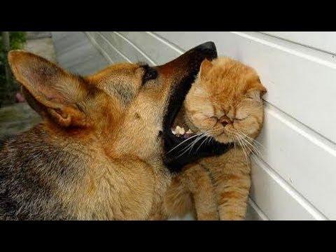 VIDEO – Kā dzīvnieki viens otru kaitina? (Animals Can Be Jerk)