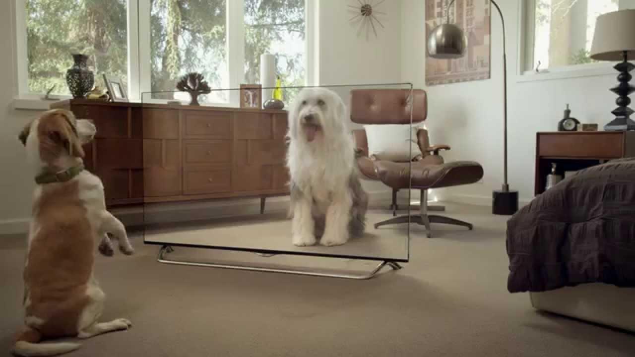 VIDEO: Kā izjokot savus mājdzīvniekus ar caurspīdīgu TV? (How To Prank Your Pets?)