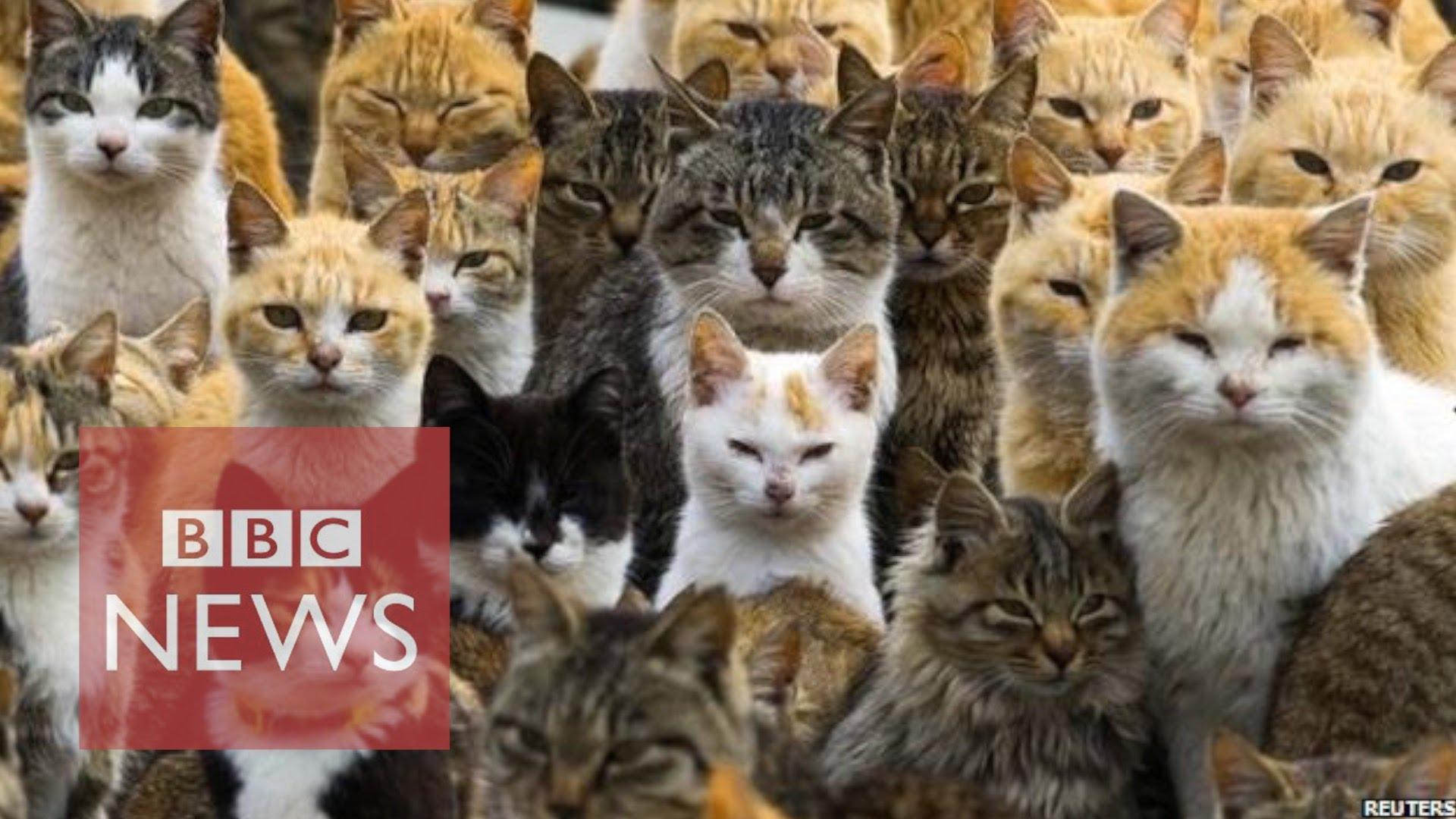 VIDEO: Tev šķiet, ka tavā pagalmā ir daudz kaķu…? (Japan's Cat Island)