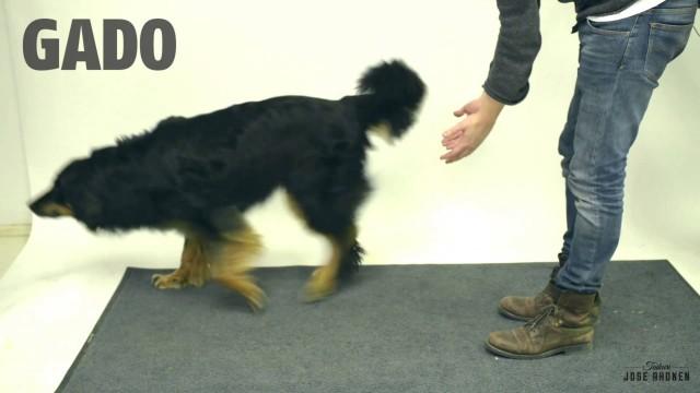 VIDEO: Kā suņi reaģē uz maģiju? (Magic for dogs)