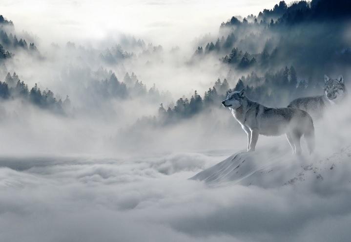 Gudra teika par diviem vilkiem, kas izlasāma vien 20 sekundēs, bet tu to atcerēsies ļoti ilgi