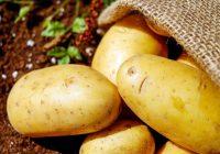 Neaptverami milzīga cenu starpība par kilogramu kartupeļu Lietuvā un Latvijā; Lūk kā skaidro, ka mums Latvijā jāmaksā krietni vairāk