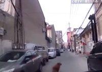 VIDEO: Zelta retrīvers aizved ātro palīdzību uz vietu, kur saļimis uz zemes guļ viņa saimnieks