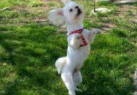 """Ķīpsalā pirmo reizi norisināsies """"suņu freestyle"""" sacensības jeb dejas ar suņiem"""