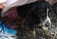18 gadīgs suns izrokas no kapa; saimnieki apglabā mīluli, jo domā, ka tas devies uz labākiem medību laukiem