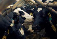 Kā 5G mainīs lauksaimniecības nozari?
