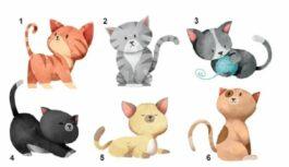 Tests: izvēlies kaķi un uzzini vairāk interesantu lietu par savu raksturu!