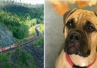 Krievijā pamests suns veica 200 km, lai atgrieztos mājās. Suņa uzticība!